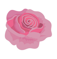 pink exotic rose with naturals petals vector image