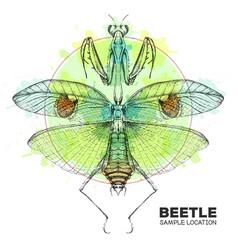 Realistic hand drawing praying mantis vector