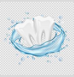 Realistic teeth clean white teeth and vector