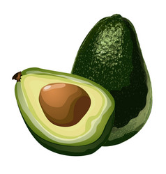 green avocado whole and slice with corn vector image