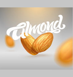 Almond typography with realistic of vector