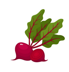bright of fresh beets isolated vector image