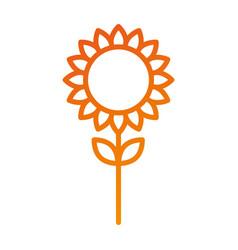 sunflower natural plant petal decoration vector image