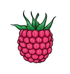 beautiful cartoon pink raspberry with black vector image