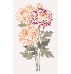 Bouquet of chrysanthemums vector