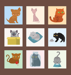 cute cats cards character different pose funny vector image