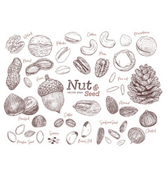 nut and seed collection hand draw vector image