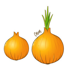 Onions vegetable hand drawing vector