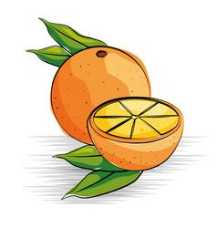 orange fresh and healthy fruit vector image