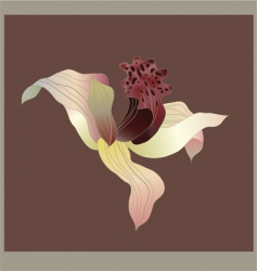 orchid card vector image