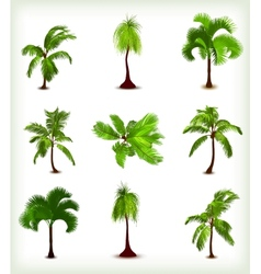 Set of various palm trees vector image