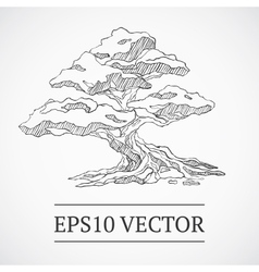 Sketched vintage bonsai tree vector