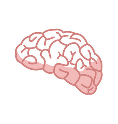 Human brain for medical health design vector