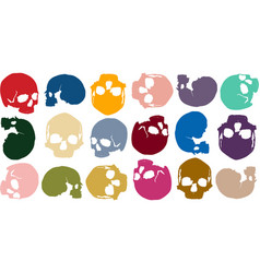 background skull color vector image