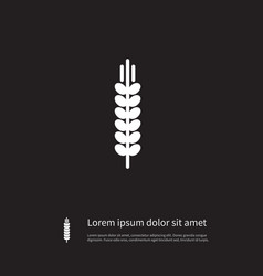 Isolated barley icon spike element can be vector