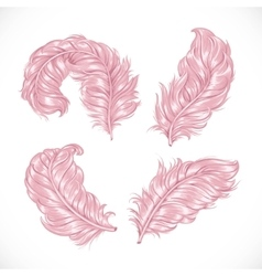Large pink fluffy lush ostrich feathers isolated vector