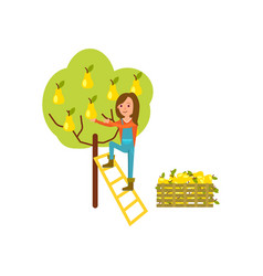 farmer harvest from tree icon vector image vector image