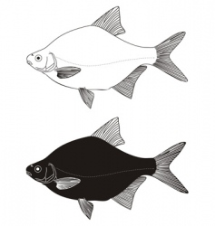 freshwater fish bream vector image vector image