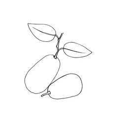 Hand drawn kumquat fruits isolated design vector