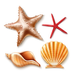 Realistic 3d sea shell starfish set vector