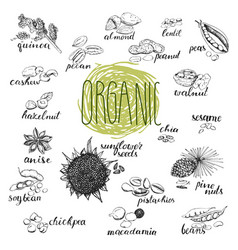 seeds and nuts set hand drawn sketches of organic vector image