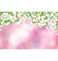Spring background blossom vector