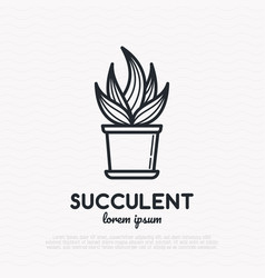 Succulent in pot thin line icon vector
