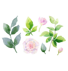 Watercolor hand painting set of peony vector
