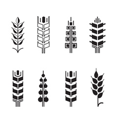 Wheat ear symbols for logo icon set leaves icons vector