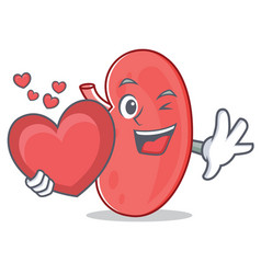 With heart kidney mascot cartoon style vector