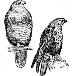 bird buteo vector image vector image