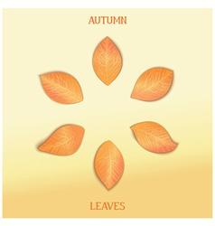 Set autumnal foliage vector image