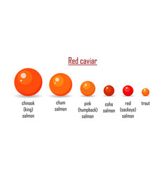 different variety red caviar salmon isolated on vector image
