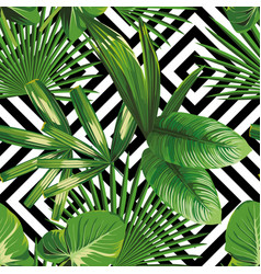 exotic jungle plant tropical palm leaves vector image