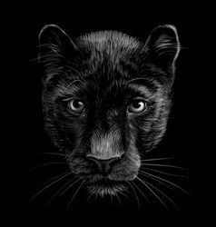 panther artistic black and white portrait vector image