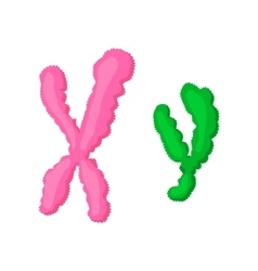 X and Y chromosome cartoon icon vector