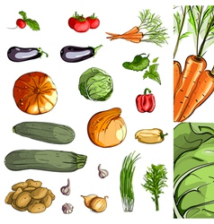 Fresh Vegetables Green Collection vector image