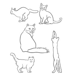 Cat line on a white background 03 vector