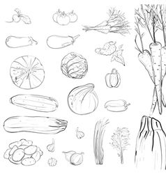 Fresh Vegetables Sketch Collection vector image