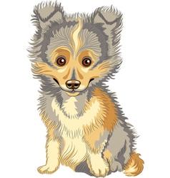 cute puppy breed shetland vector image vector image
