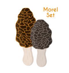 edible mushrooms morel cartoon flat style vector image