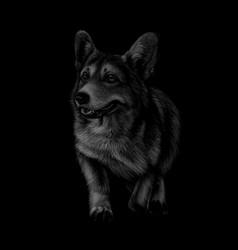 Portrait of welsh corgi on a black background vector