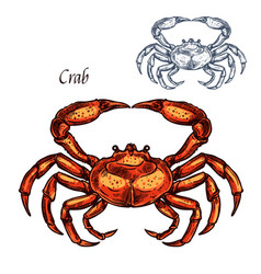 Red crab animal isolated sketch vector