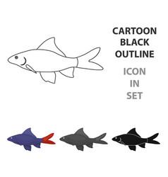 red tail shark fish icon cartoon singe aquarium vector image