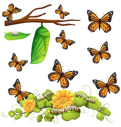 Different stages of butterfly vector image vector image
