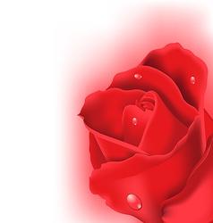 Red rose for design your celebration card vector