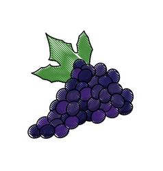 draw grape bunch fruit leaf food design vector image