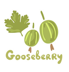 Fresh gooseberry berries or fruits organic food vector