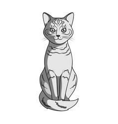 gray catanimals single icon in monochrome style vector image