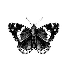 hand drawn red admiral butterfly vector image